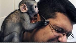 cum-tu-monkey-business