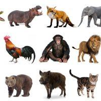 từ vựng tiếng Anh về các con vật
